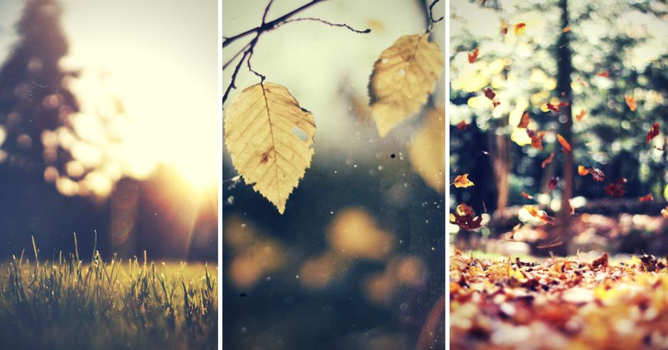 noiembrie_image