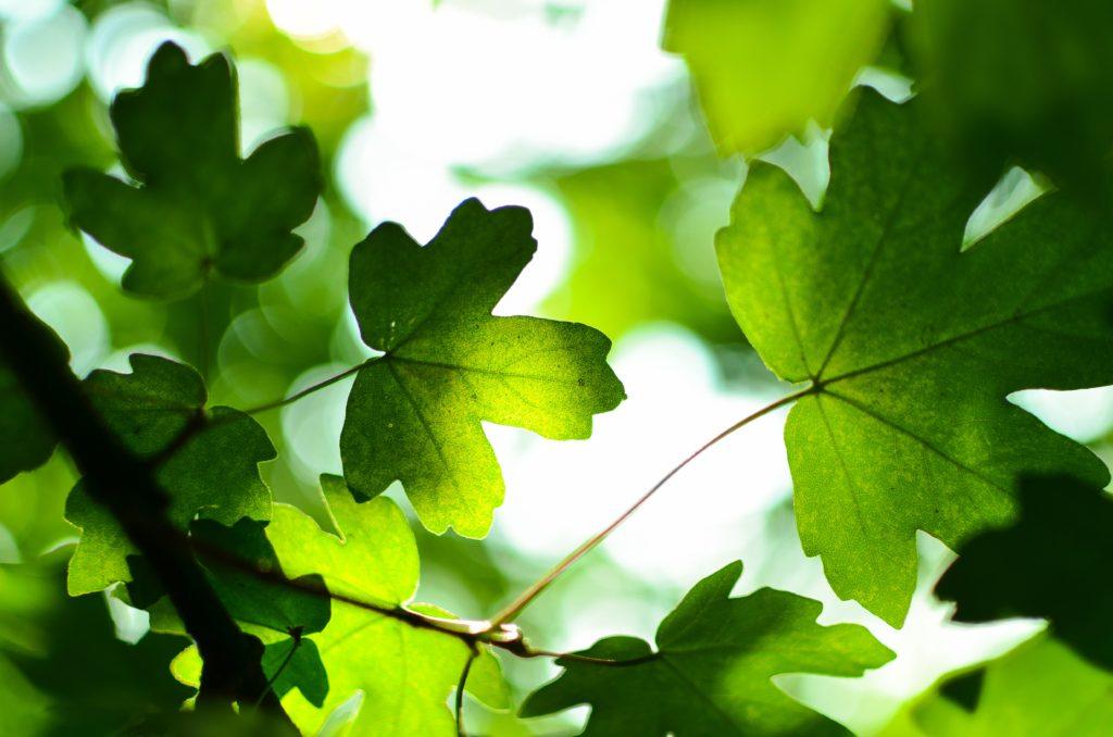 culoarea anului 2017 greenery verde crud