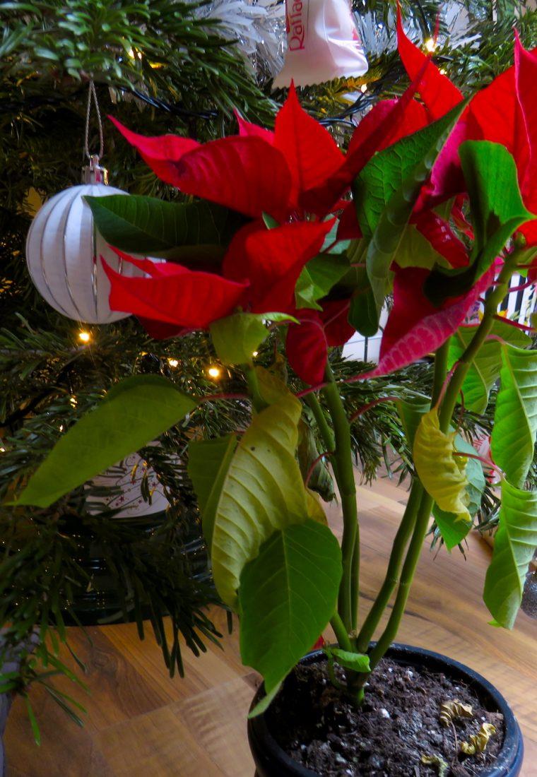 TO DO list: lucruri de făcut până la Crăciun