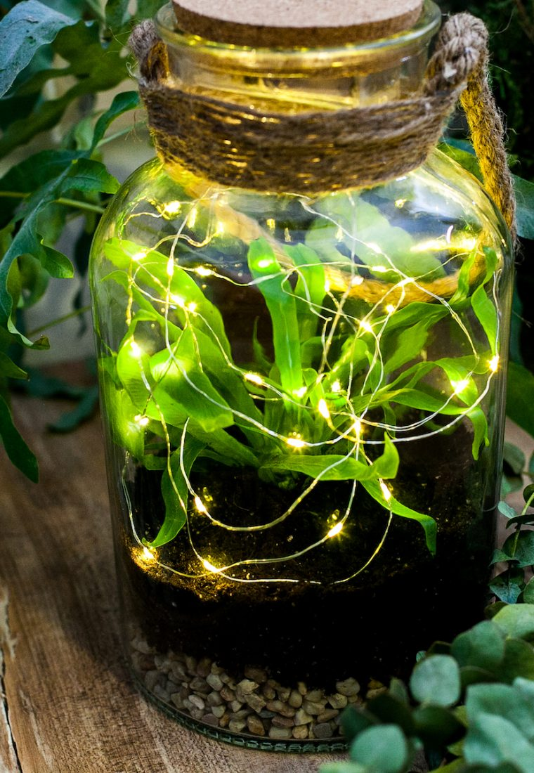 Plante verzi, povești despre viață și idei de cadouri inspirate din natură